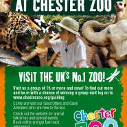 Chester Zoo Advert